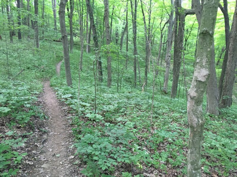 Typical section of the mountain bike trail portion of this route.