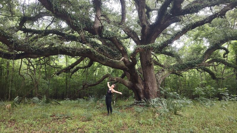The most beautiful Live Oak you are likely to ever see.