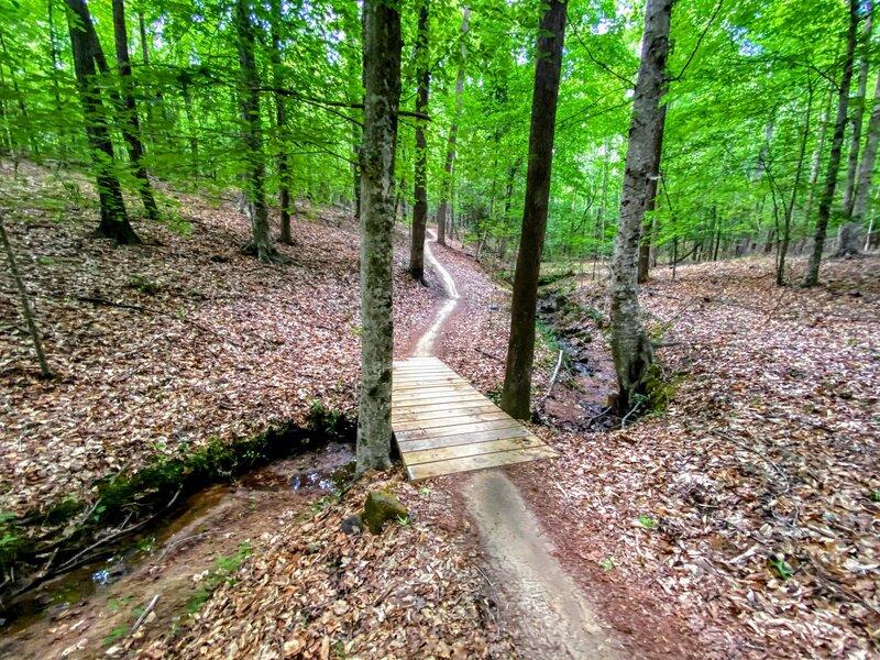 Pretty creek cutting through the woods