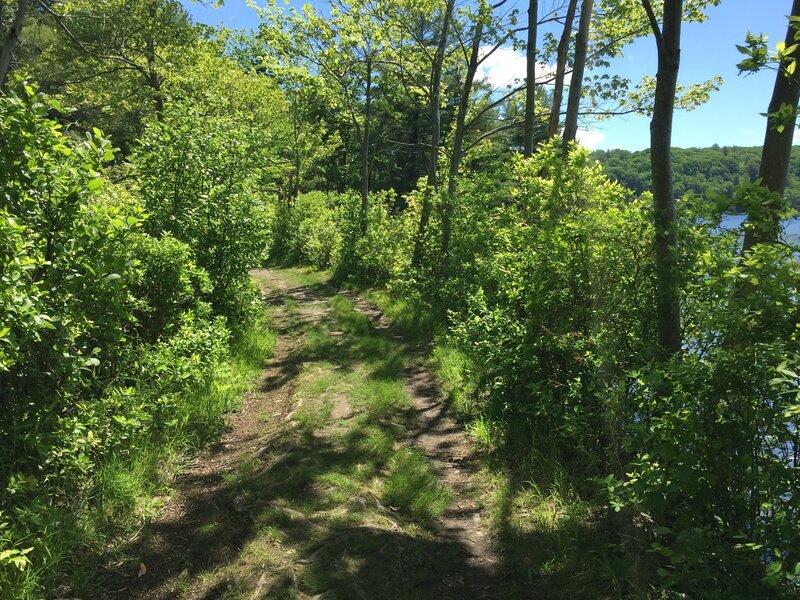 Yellow trail/Blue trail