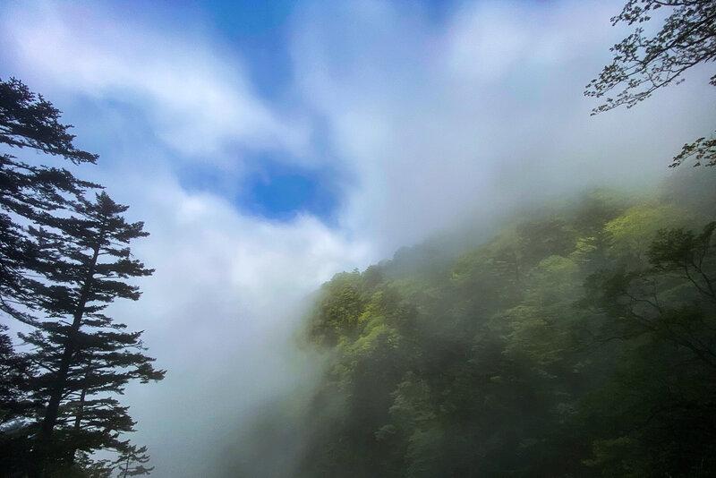 A view through the fog.