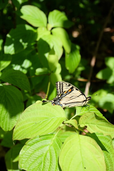 Butterfly on Walter Tovell Trail