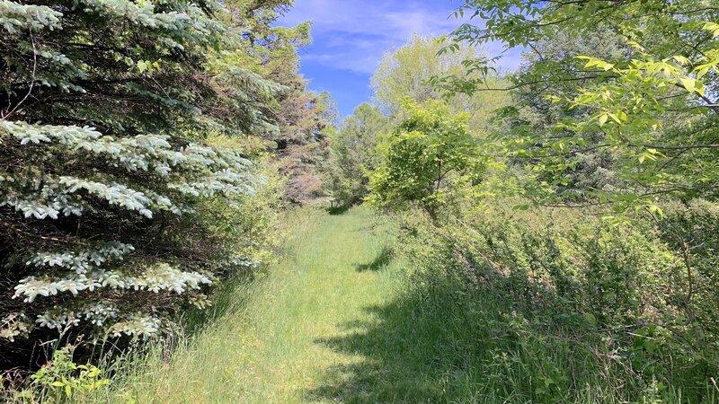 Spacious trail