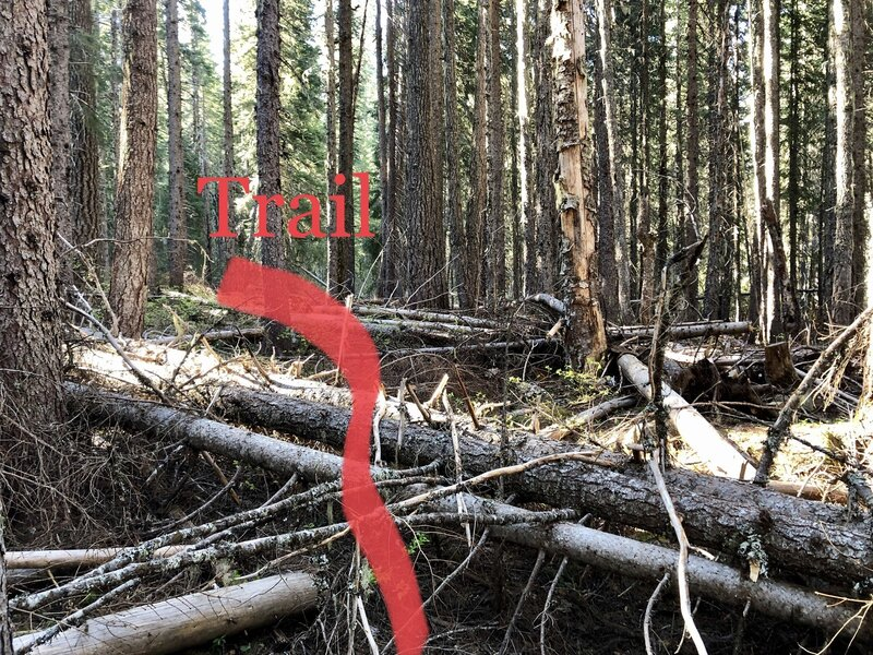 Dead fall covering trail May 2021
