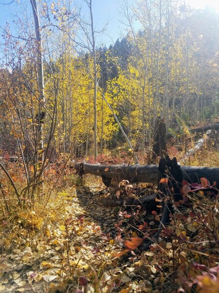 Downed trees litter the first 0.2-miles of the trail.