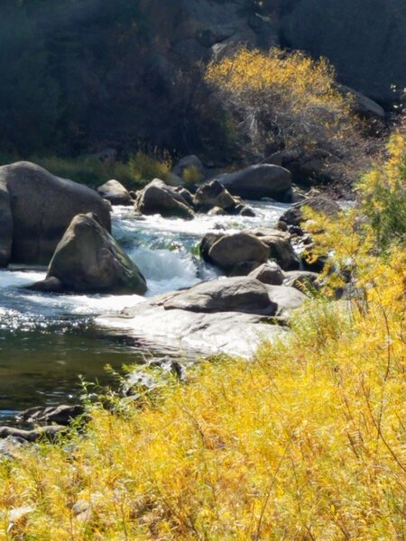 Looking Upstream - Majestic Boulders scattered in the South Fork of the South Platte River.