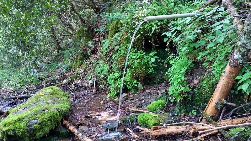 Water source along Snowbird Creek Trail.
