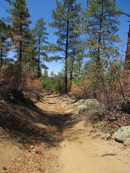 Trail 384