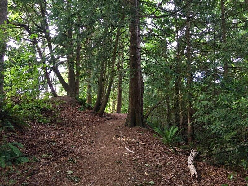 Quiet forest in NE corner of loop trail.