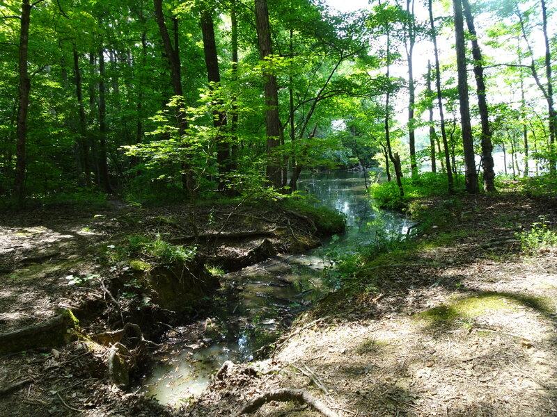 Badin Lake Trail #94