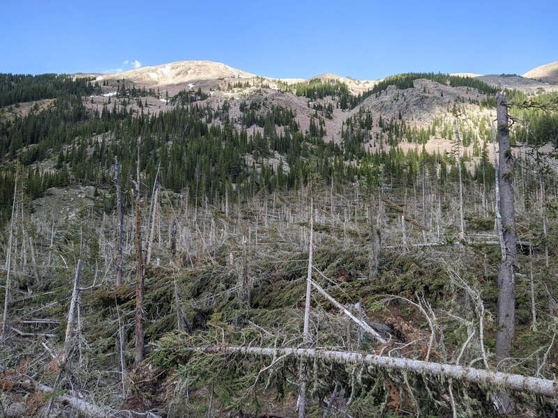Blown-down trees at the trail end.