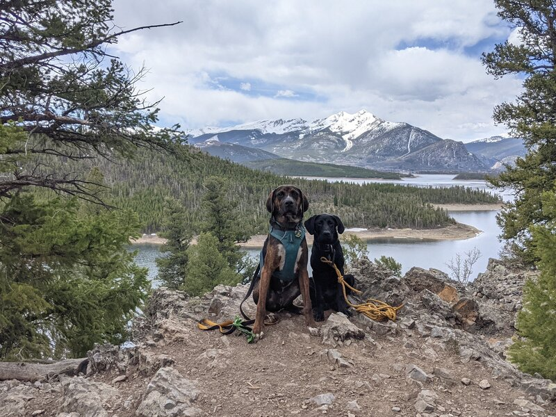Two very good boys and the gorgeous views to the west along the Ridge Trail.