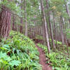 Switchback forest section of Osborne Mountain Trail.
