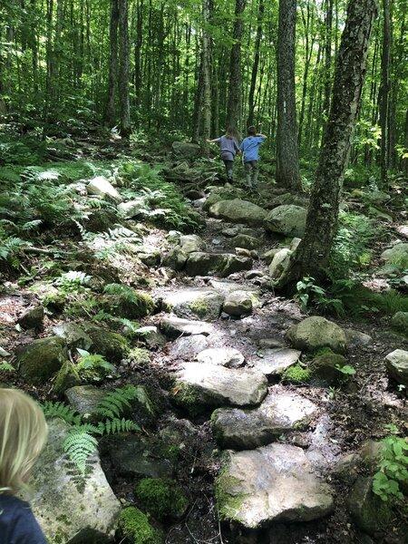 Appalachian Trail near Bennington, VT