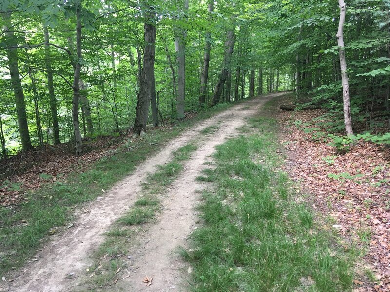 """Typical trail section for this hike. Flat, packed, wide dirt lanes. More of a """"walk in the woods"""" than a hike."""