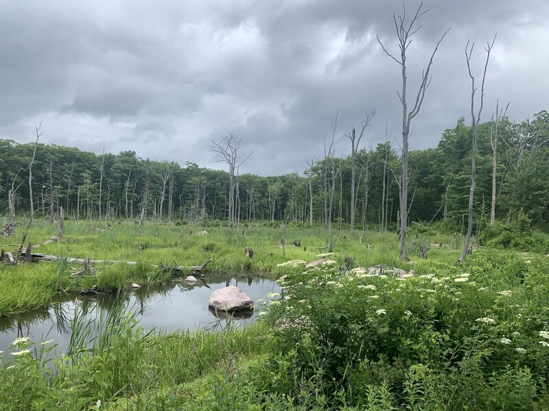 """Beacon Hill """"Lake"""" is not exactly a lake. VERY buggy in their entire area."""