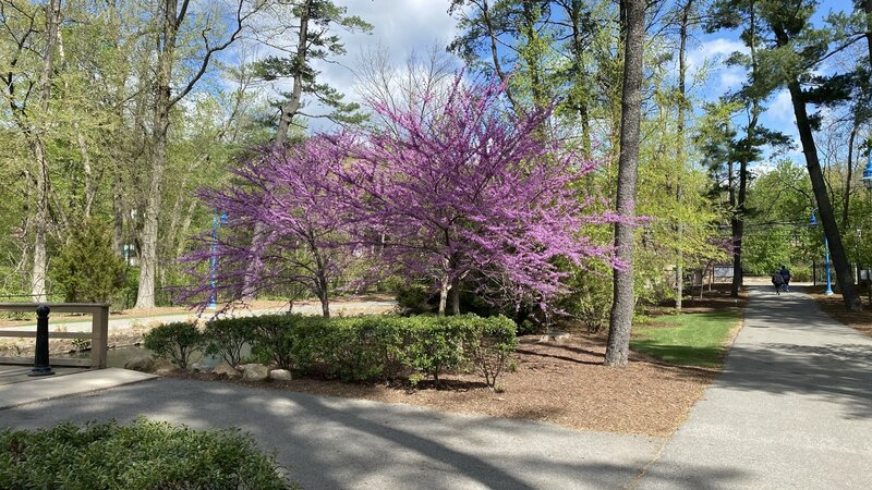 With spring, comes the vibrant colors along the loop road.
