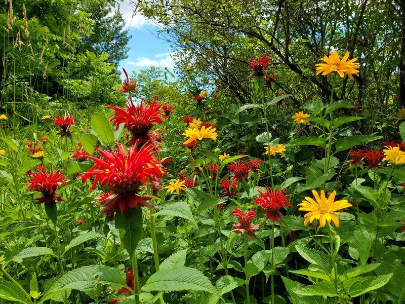 Flowers along Garden Trail