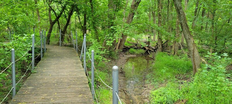One of the boardwalk sections that runs along a creek.