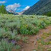 At about 2.8 miles, Buckeye Canyon turns and we get our first views of the rugged granite mountains at the end of the canyon. There are flowers everywhere. Here it is mule ears and lupin. Not visible are fields of iris that have passed their peak