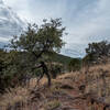 Madera Canyon Trail