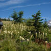 Hiking through beargrass in early July.
