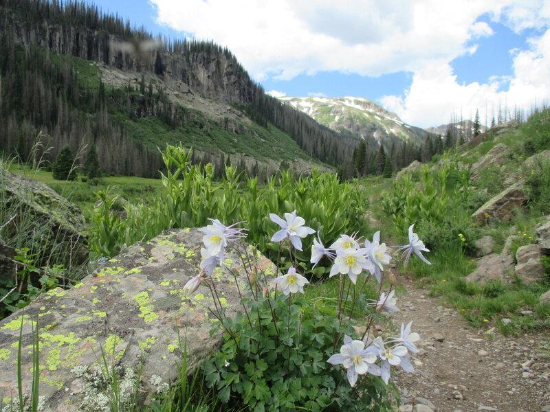 Columbine on the trail