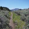 Trail through sage brush.