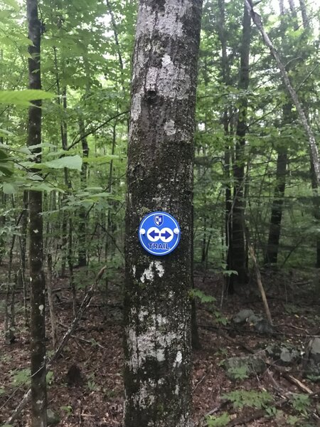 Marker at the start of the Blue Trail loop.