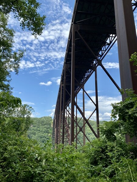 View from under New Bridge on the Bridge Trail