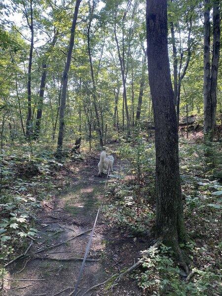 A dog hiking along the trail.