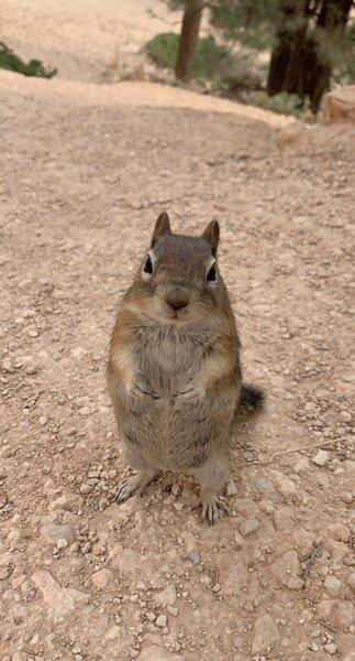 Squirrel near the trail