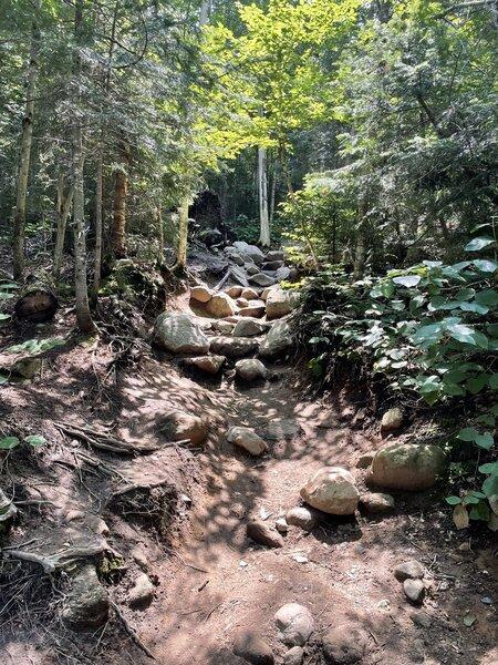 Hiking trail to Mt Willard.