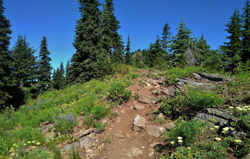 Climbing up to Poe Mountain in the distance (upper center) on the ridge top, amid wildflowers on Little Wenatchee Ridge Trail in mid July.