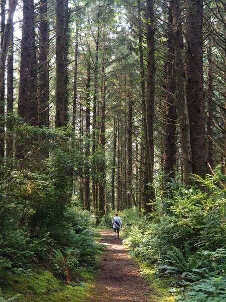 Hiking under a canopy of Sitka spruce.