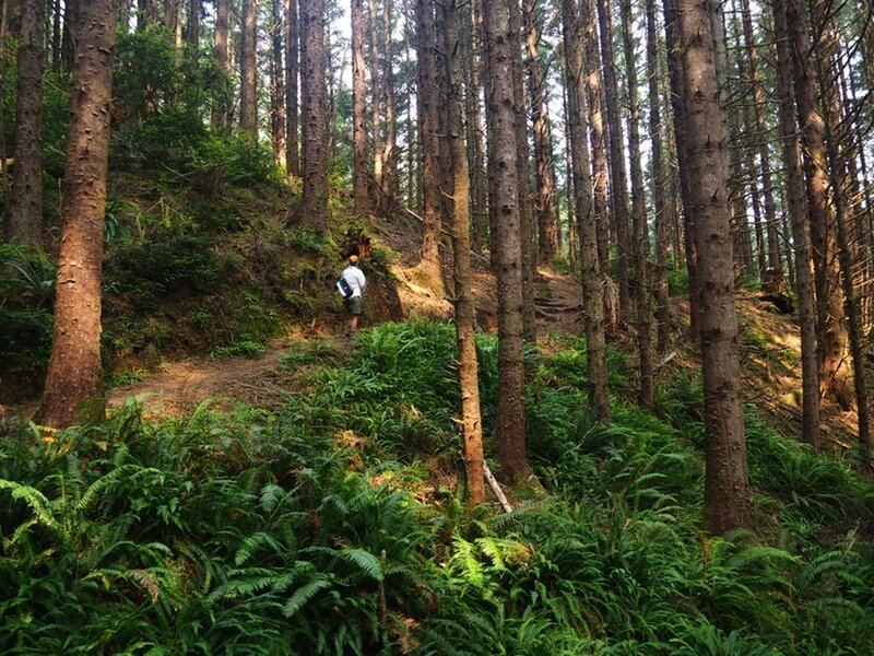 Just before the junction with the Cape Arago Pack Trail.
