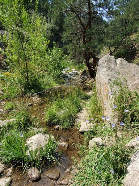 Late summer wildflowers and a little flowing water.