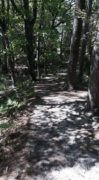 Easy trail to the campsites and Lake Michigan. Wonderful scenery!
