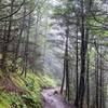 Charles Bunion Trail - even pretty to hike during rain.