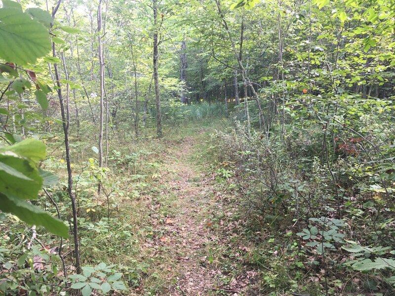 Narrow trail.