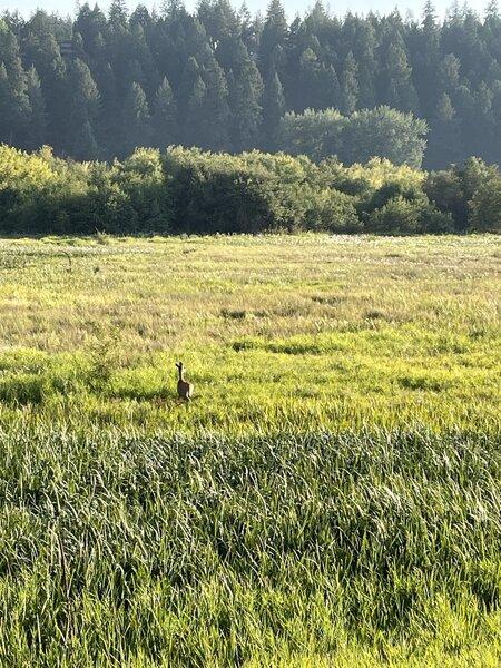 Deer along the trail.