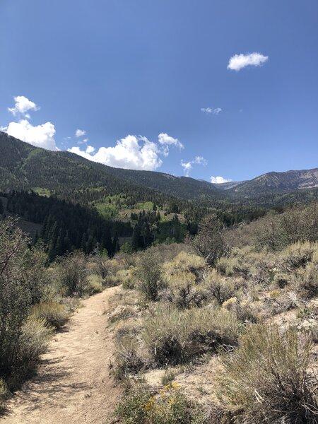 View of snake creek mountain area.