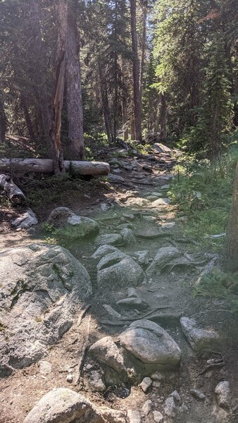 Increasingly rocky eroded trail as you approach the lake.