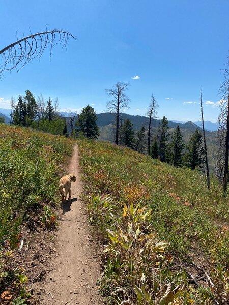Trail pup on Skyline Trail.
