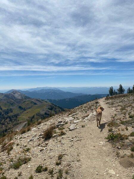 Hank on Jackson Peak Trail.