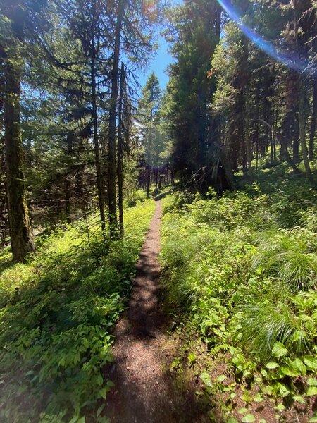 Sheep Mountain Trail.