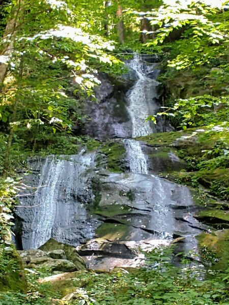 Fern Branch Falls about half way up Porters Creek Trail.