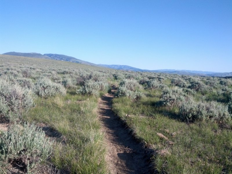 Sage brush slalom. That's what desert riding in Cody is all about. What fun are straight trails anyway?