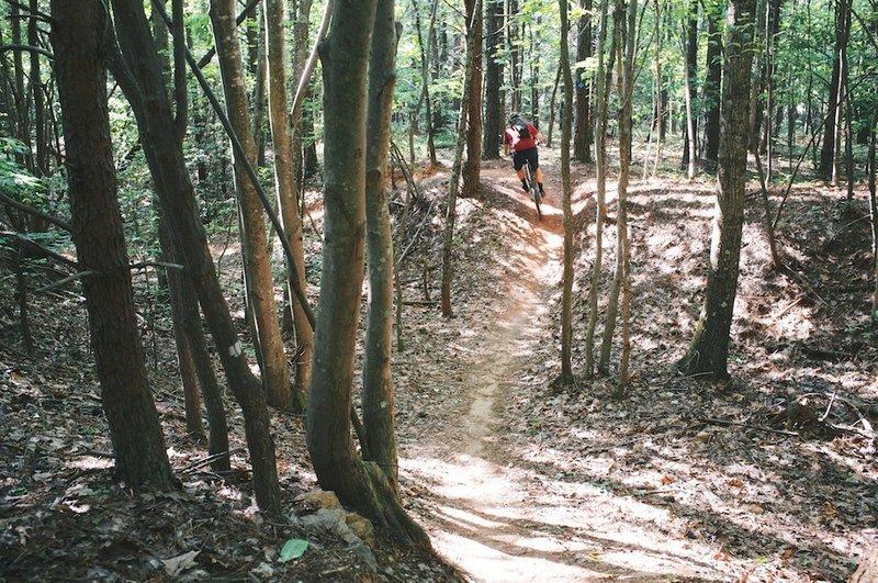 A gully run on Laurel.