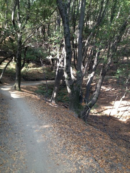 One of the nice singletrack sections.